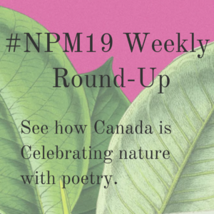 NPM19: Weekly Round-Up | WEEK FOUR