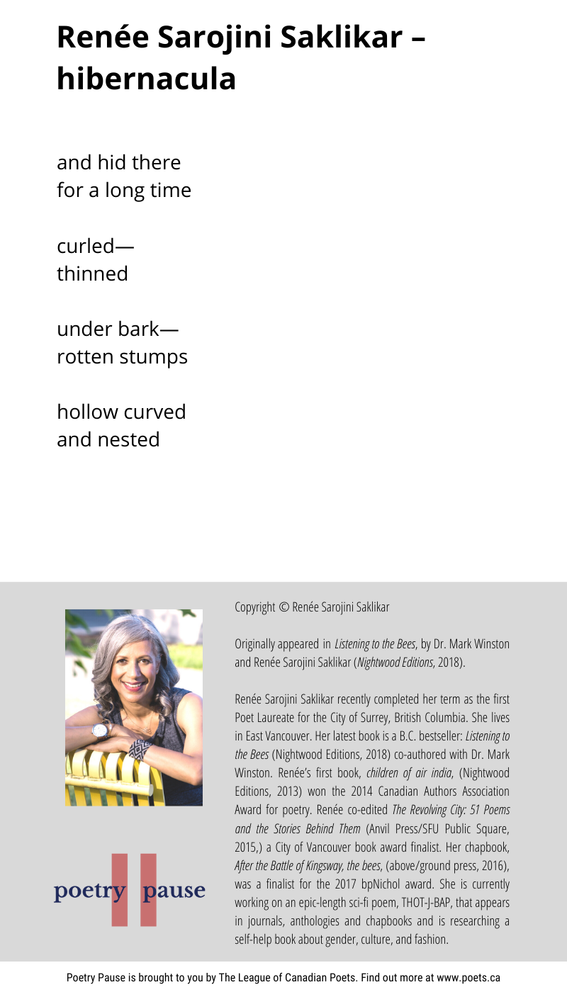 Poem author: Renée Sarojini Saklikar Poem title: hibernacula Poem: and hid there for a long time curled― thinned under bark― rotten stumps hollow curved and nested End of Poem. Copyright © Renée Sarojini Saklikar Originally appeared in Listening to the Bees, by Dr. Mark Winston and Renée Sarojini Saklikar (Nightwood Editions, 2018). Renée Sarojini Saklikar recently completed her term as the first Poet Laureate for the City of Surrey, British Columbia. She lives in East Vancouver. Her latest book is a B.C. bestseller: Listening to the Bees (Nightwood Editions, 2018) co-authored with Dr. Mark Winston. Renée's first book, children of air india, (Nightwood Editions, 2013) won the 2014 Canadian Authors Association Award for poetry. Renée co-edited The Revolving City: 51 Poems and the Stories Behind Them (Anvil Press/SFU Public Square, 2015,) a City of Vancouver book award finalist. Her chapbook, After the Battle of Kingsway, the bees, (above/ground press, 2016), was a finalist for the 2017 bpNichol award. She is currently working on an epic-length sci-fi poem, THOT-J-BAP, that appears in journals, anthologies and chapbooks and is researching a self-help book about gender, culture, and fashion.